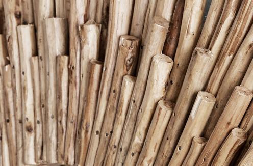 Photo of Natural Eucalyptus